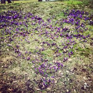 En hjertlig hilsen fra Botanisk hage