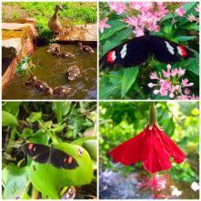 botaniskcollage